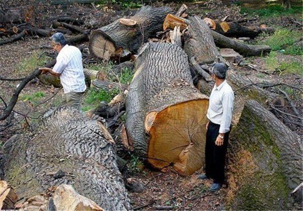 چوب و خاک غرب کشور قاچاق میشود